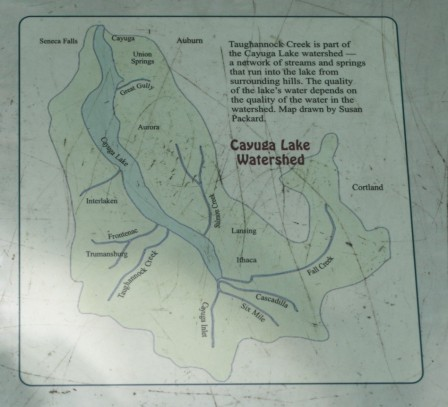 Cayuga Lake Watershed; Photo Courtesy David Arellanes