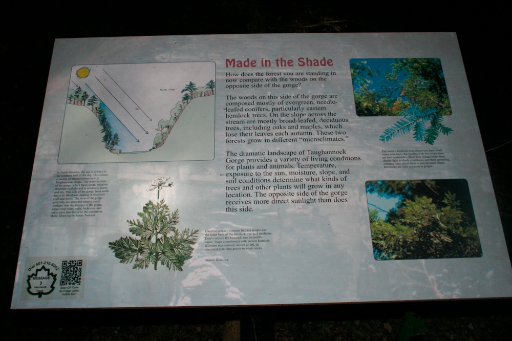 Taughaunook Falls infographic biodiversity; Photograph courtesy David Arellanes