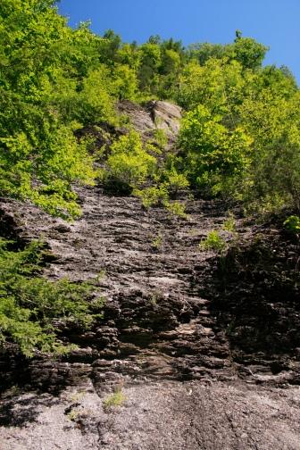 veg on gorge