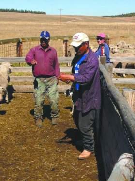 Peruvian shepherds; Photo by Sheridan Little in Tri-State LIvestock News, 2013
