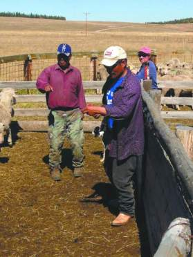 Peruvian shepherds; Photo by Sheridan Little in Tri-State LIvestock News, 2013