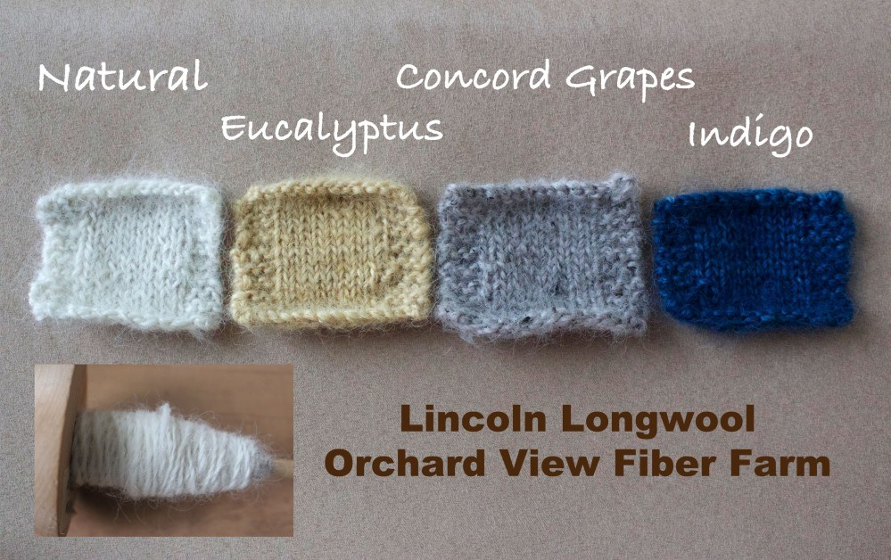 Lincoln Longwool Swatches and Dyeing, 2015