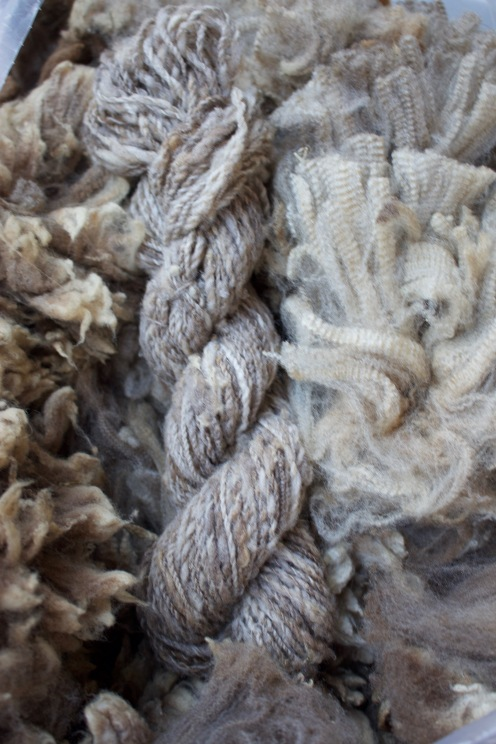 Sally Fox Merino Wool, 2017