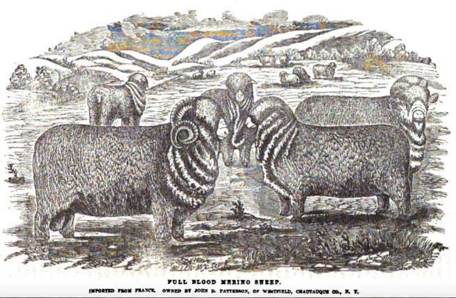 Rambouillet Sheep Engraving by RH Pease of Albany, 1854